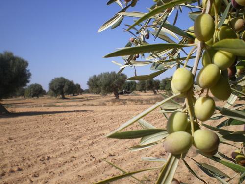 Réseaux sociaux d'entreprise : la graine, le fruit et le terreau